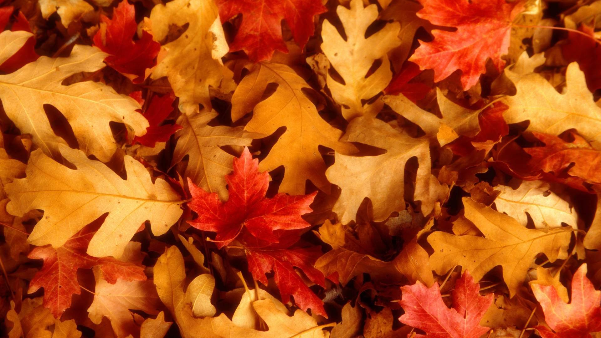 quercia_foglie_autunno